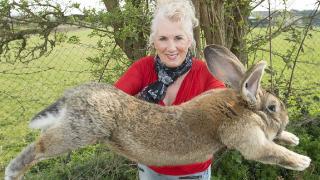 Dünyanın en büyük tavşanı kaçırıldı