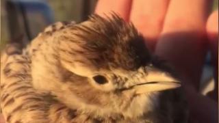 Soğuk göçmen kuşları vurdu