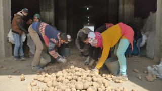 Cumhurbaşkanı Erdoğan'ın müjdesi Ahlatlı patates üreticilerini sevindirdi