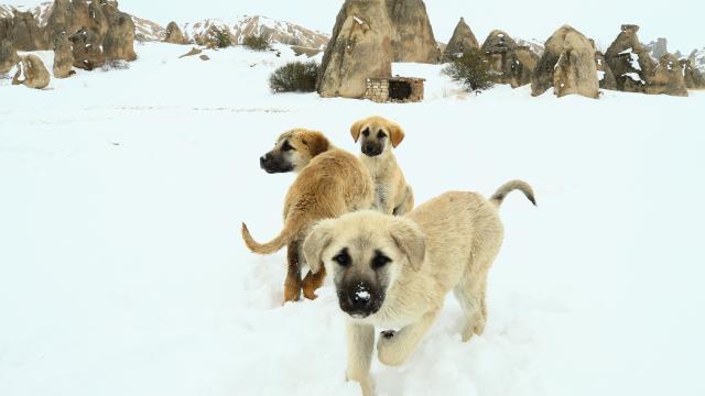 İlkbaharda yağan kar Kapadokyada güzel görüntü oluşturdu