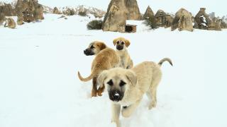 İlkbaharda yağan kar Kapadokya'da güzel görüntü oluşturdu