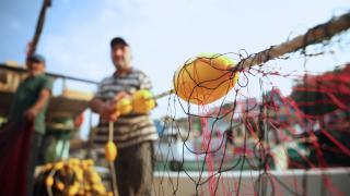 Balıkçılıkta av sezonu sona eriyor