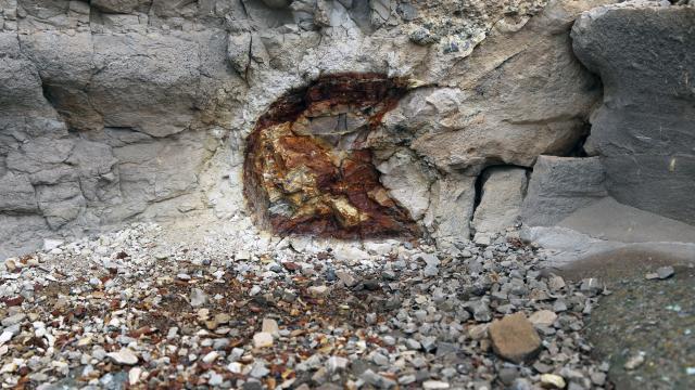 """Türkiyenin ilk """"fosil ormanının"""" UNESCO Dünya Miras Listesine alınması için çalışma başlatıldı"""