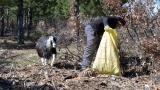 Keçisiyle çevreyi temizliyor