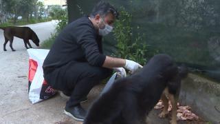 Tiyatro sanatçısı kazandığı parayla hayvanları besliyor