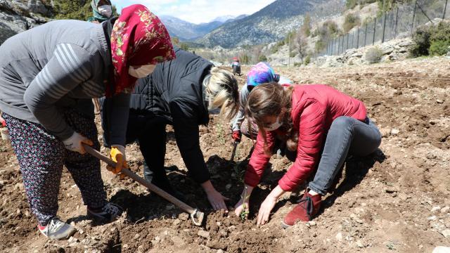 Antalyada tıbbi aromatik bitkilerin yaygınlaştırılması ve bilinçli tarımla üretilmesi için çalışma yapılıyor