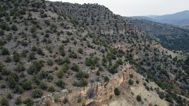 Türkiyenin ilk fosil ormanı UNESCO listesi yolunda