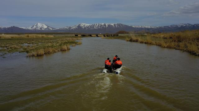 Kaçak avlanılan 3 ton inci kefali göle geri bırakıldı