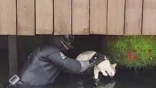 Sahil Güvenlik Komutanlığı ekipleri mahsur kalan kediyi kurtardı