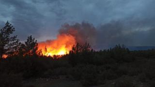 Muğla'da iki farklı ormanlık alanda yangın