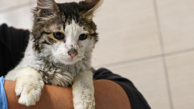Kedileri aç bırakıp işkence eden kadın hapis cezasına çarptırıldı