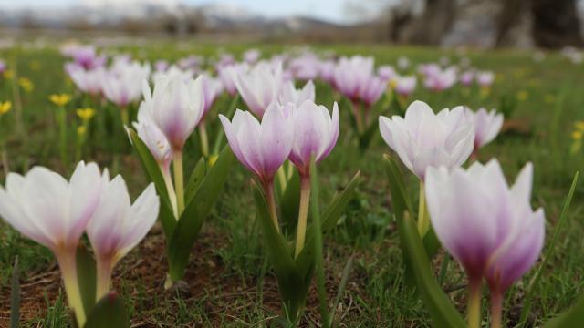 Tunceli yaylalarında bahar