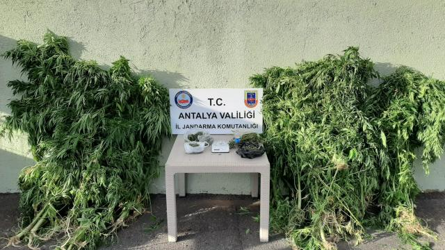 Antalyada Hint keneviri yetiştirilen eve düzenlenen operasyonda bir zanlı yakalandı