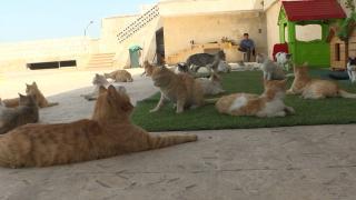 Savaş mağduru kedilere sahip çıkıyor