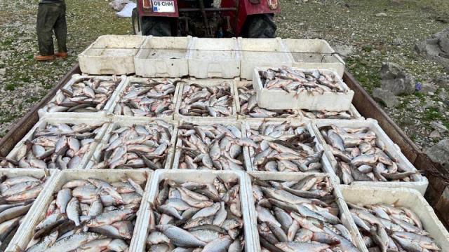 Köpek maması yapmak için kaçak balık avlayan 4 kişi suçüstü yakalandı
