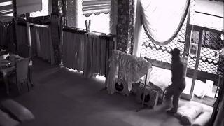 Perdeciyi soyan hırsızlar kamerada