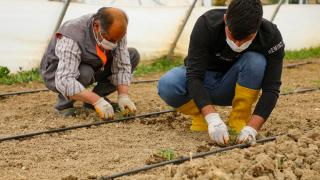 Gürpınar'da sebze ve meyve fideleri toprakla buluştu
