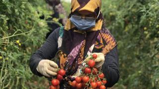 Antalya'da üreticiler zorlu ramazan mesaisinde ter döküyor