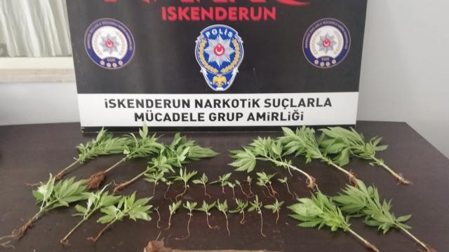 Hatayda uyuşturucu operasyonunda 1 kişi gözaltına alındı