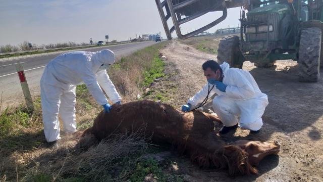 Aksarayda otomobilin çarpmasıyla yaralanan at, hayvansever vatandaşın çabasıyla kurtarıldı