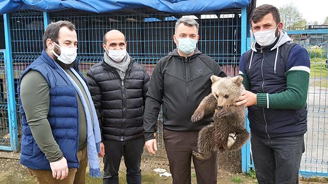 Sakaryada eve giren ayı yavrusu koruma altına alındı