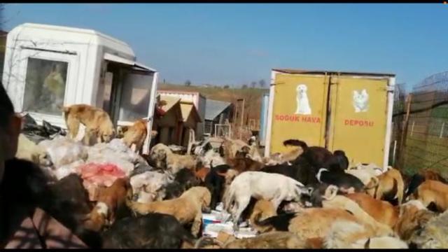 Kocaelide 250 köpeğin bulunduğu ruhsatsız barınak mühürlendi