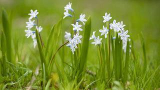 Munzur Vadisi çiçeklerle renklendi