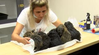 Ankara'da 6 yavru köpek foseptik çukurunda bulundu