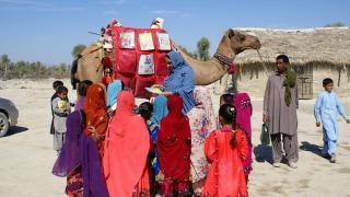 """Pakistan'da """"gezici deve kütüphane"""" çocukları kitapla buluşturuyor"""