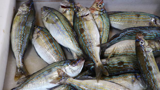 Vatandaşlardan menekşe balığına yoğun ilgi