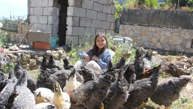 Harçlığıyla 20 civciv alan Lidyanın 65 tavuğu oldu