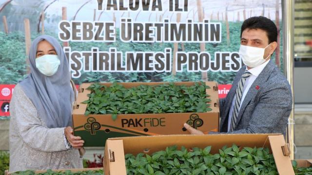 Yalovada çiftçilere 60 bin biber fidesi dağıtıldı