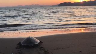 Rehabilite merkezinde tedavi edilen deniz kaplumbağası denize bırakıldı