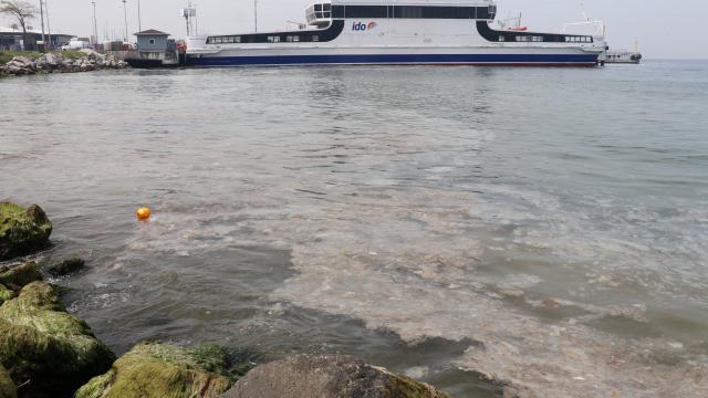 Deniz yüzeyinde oluşan beyaz tabaka kıyıya da vurdu