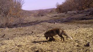 Yozgat'ta fotokapanlar yaban hayvanlarını görüntüledi