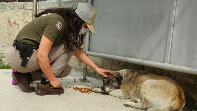 Artvinde polisler tam kapanmada sokak hayvanlarını besledi
