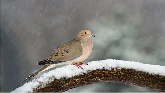 İtalya, nesli tükenme tehlikesinde olan kuşun avlanmasına izin verdi