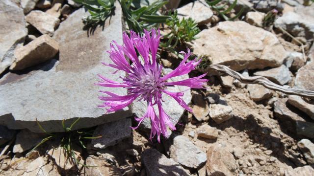 Yama Dağında yeni bir çiçek türü keşfedildi