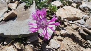 Yama Dağı'nda yeni bir çiçek türü keşfedildi