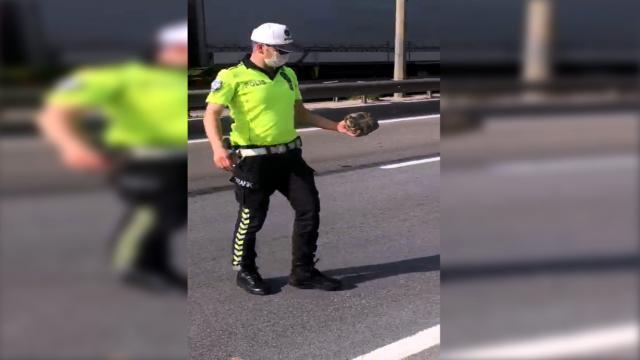 Kara yolunda karşıdan karşıya geçmeye çalışan kaplumbağaya polis yardım etti