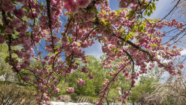 Son 51 senenin en sıcak 9. ilkbaharı bu yıl yaşandı