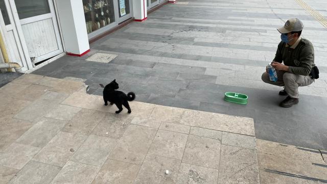 Kırşehirde polis ekipleri sokak hayvanlarına mama, süt ve su bıraktı