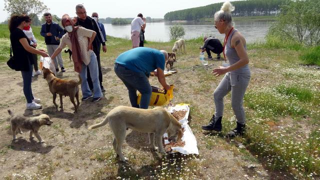 Edirnede tam kapanmada sokak hayvanlarını beslediler