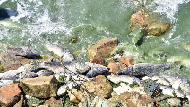 Lübnandaki Karun Baraj Göletinde tonlarca balık telef oldu