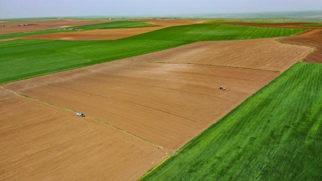 Pamuk tohumunu toprakla buluşturan çiftçiler bu yıl da yüksek verim bekliyor