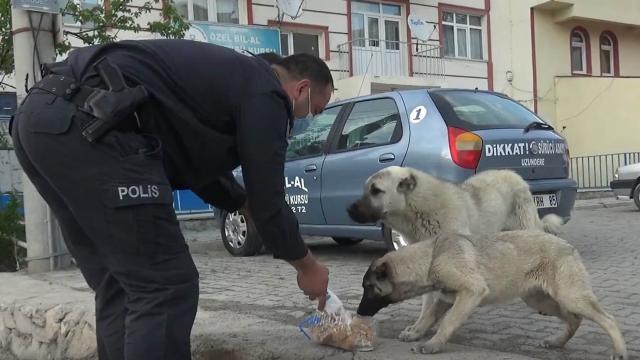 Tam kapanmada aç kalan sokak hayvanlarının yardımına polis koştu