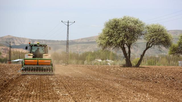 Sivasta 170 dekar alanda kenevir ekimi yapıldı