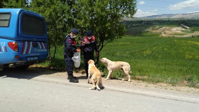 Kahramanmaraşta jandarma ekipleri kısıtlamada sokak hayvanlarını besledi