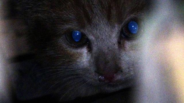 Otomobilin motor kısmına giren kedi yavrusu için ekipler seferber oldu