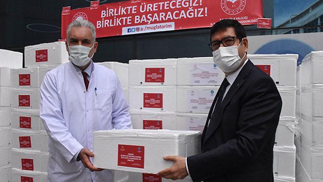 Muğlada sağlık çalışanlarına 20 ton balık dağıtıldı